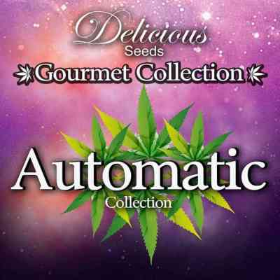 Gourmet Collection Automatic 1 Samen > Delicious Seeds