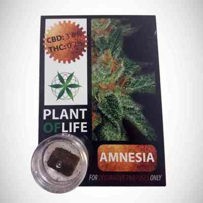 CBD Hash 3.8% Amnesia > Plant Of Life