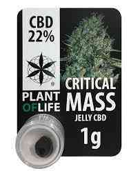 CBD JELLY 22% CRITICAL MASS > Plant Of Life