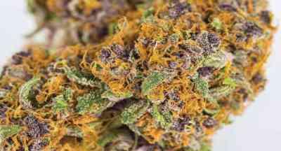 Grape Ape Samen > Barney\'s Farm