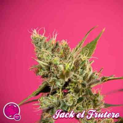 Jack El Frutero > Philosopher Seeds