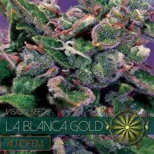 La Blanca Gold Auto > Vision Seeds