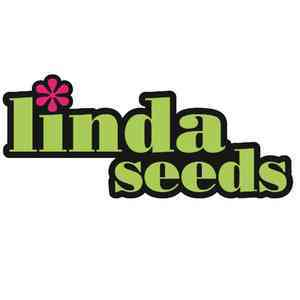 Affordable Cannabis Seeds
