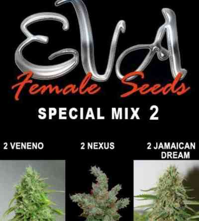 Special Mix 2 > Eva Female Seeds