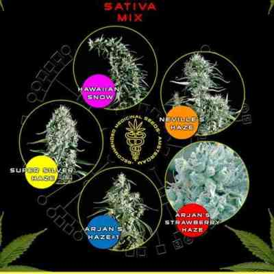 Sativa Mix > Green House Seed Company