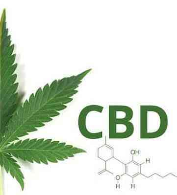 CBD Marijuana Seeds | Sativa