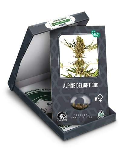 Alpine Delight CBD Auto > Sensi Seeds
