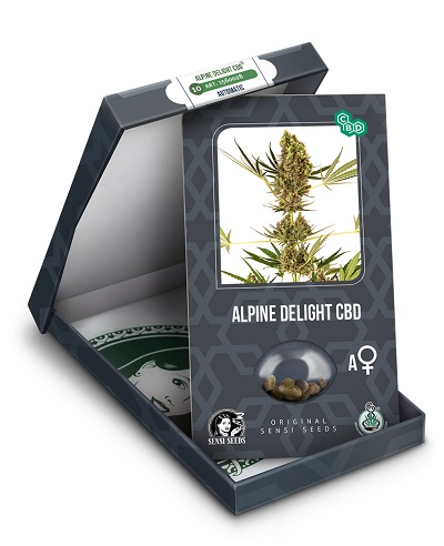 Alpine Delight CBD Auto > Sensi Seeds