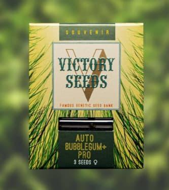 Auto Bubblegum+ Pro > Victory Seeds