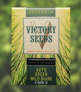 Auto Green Wild Shark > Victory Seeds