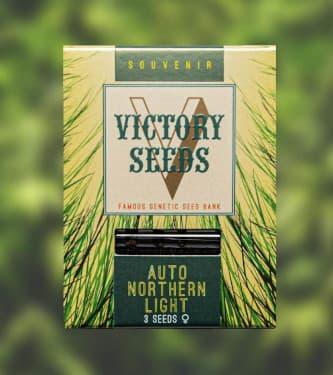 Auto Northern Light > Victory Seeds
