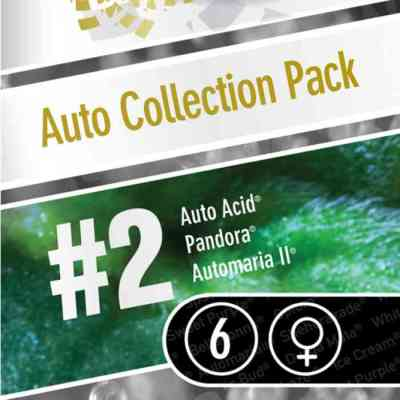 Auto Collection Pack #2 Seed > Paradise Seeds