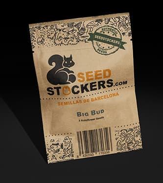 Big Bud Autoflower > Seed Stockers