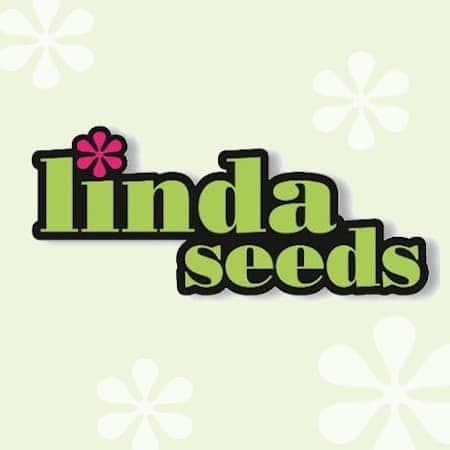 Linda Seeds
