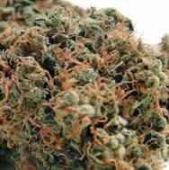 Chemdog #4 > Blim Burn Seeds