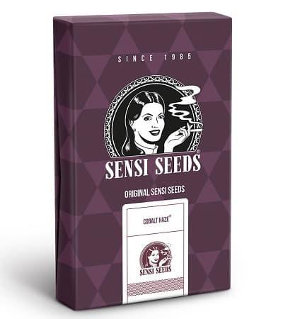 Cobalt Haze > Sensi Seeds