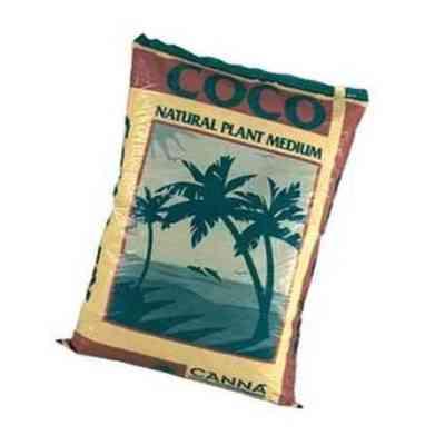 COCO MEDIUM > CANNA
