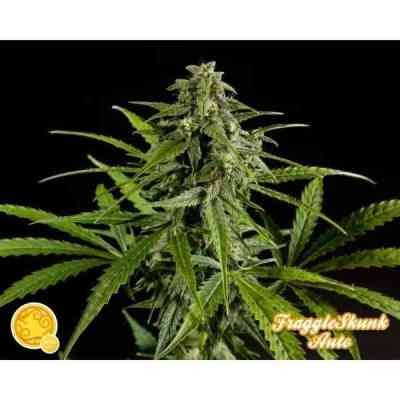 Fraggle Skunk Auto > Philosopher Seeds