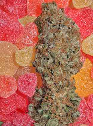 Fruitylicious > Mandala Seeds