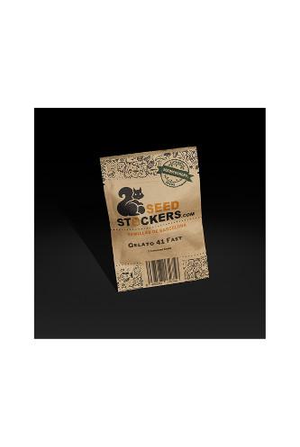 Gelato 41 Fast > Seed Stockers