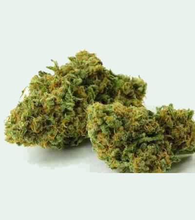 Green Crack > Fast Buds Company