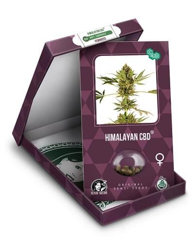 Himalayan CBD > Sensi Seeds