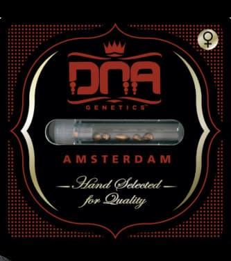 Holy Grail Kush > DNA Genetics