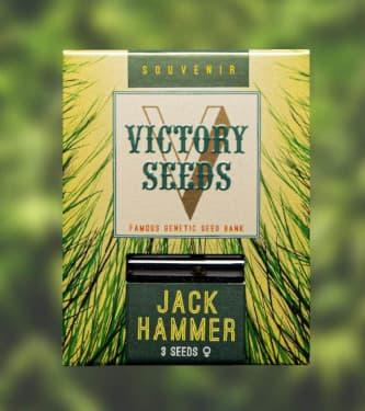 Jack Hammer > Victory Seeds