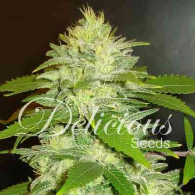 La Musa > Delicious Seeds