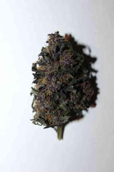 LSD-25 > Fast Buds Company