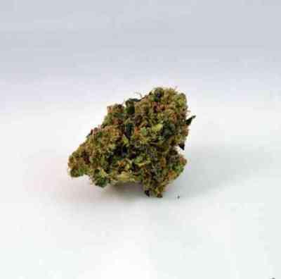 Nebula II CBD > Paradise Seeds