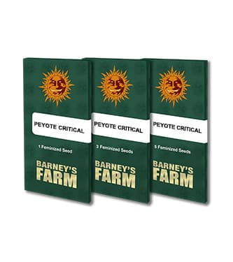 Peyote Critical > Barneys Farm