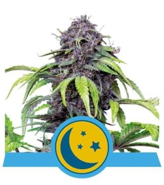 Purplematic CBD > Royal Queen Seeds