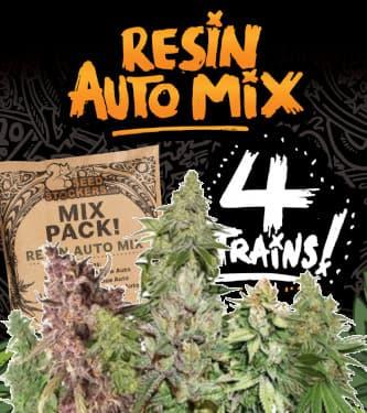 Resin Auto Mix