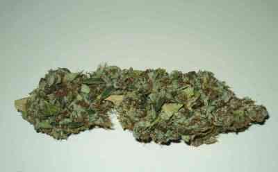 Ripper Badazz > Ripper Seeds