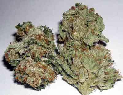 Rug Burn OG > Rare Dankness Seeds