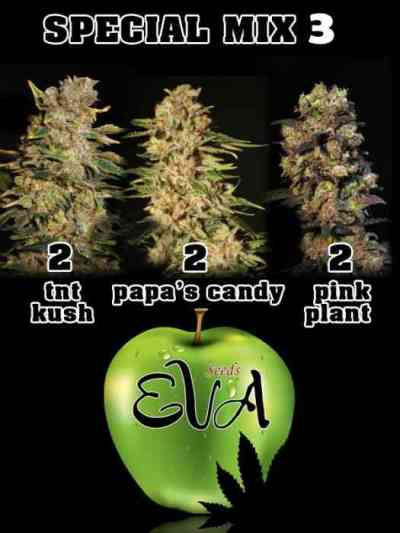 Special Mix 3 > Eva Female Seeds