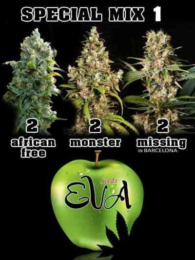 Special Mix 1 > Eva Female Seeds