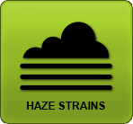 linda semilla - Haze Strains