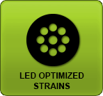 Linda-Seeds.com | Linda Semilla - LED optimised Strains