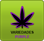 Linda-Seeds.com | Linda Semilla - TEXT_Purple_STRAIN